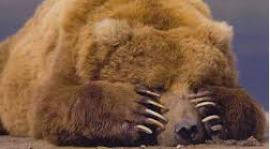 Wodzenie Niedźwiedzia 15-16.stycznia 2016.  Zabawa taneczna 16.01.2016 g.20:00