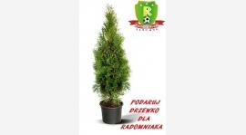 Drzewko dla radomniaka