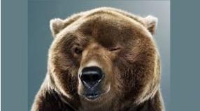 Wodzenie Niedźwiedzia 19-20.01.2018