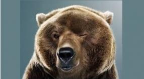 Wodzenie Niedźwiedzia 20-21.01.2017